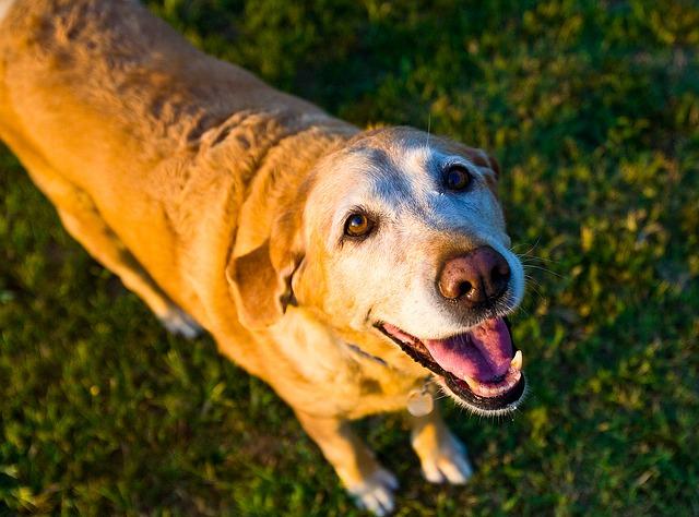 אוכל יבש לכלבים מבוגרים